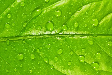 green leaf background with raindrops Stock Photo - 6979074