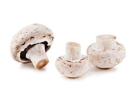 mushroom isolated on white background photo