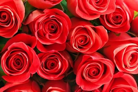 full red: pattern di rose rosse close up Archivio Fotografico