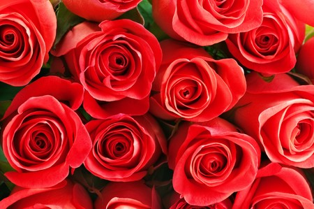 red heads: red rose pattern close up