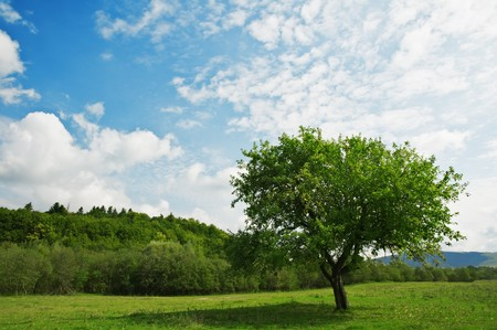 green tree and cloudy sky Stock Photo - 6979537