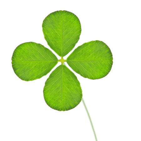 green clover isolated on white Stock Photo - 7033501