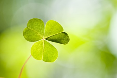 st  patrick s: background from green clover leaf Stock Photo
