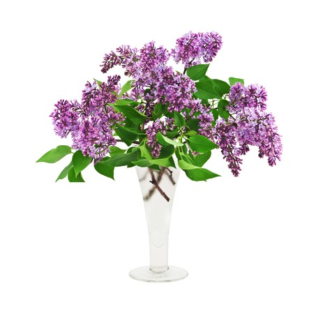 lilac bouquet in vase isolated Stock Photo
