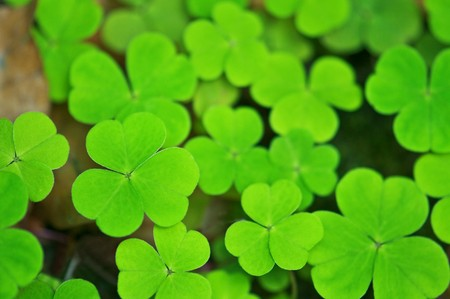 background from green clover leaf photo