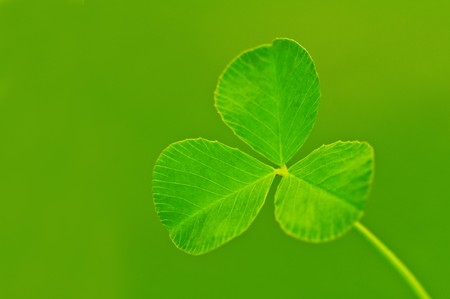 background from green clover leaf Stock Photo - 7097838