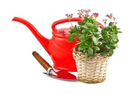 shovel, flower and red watering can photo