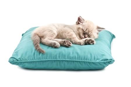 Kitten Schlaf auf Kissen, isoliert auf weiss