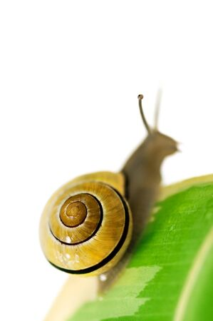 yellow snail on green leaf closeup photo