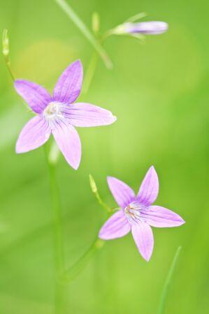 Fleurs de beauté Rose de près Banque d'images - 7235090
