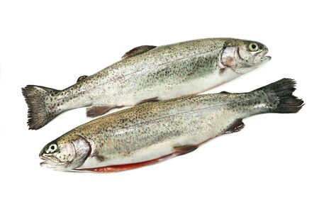 two trout isolated on white photo