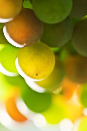 multi colored grape close up Stock Photo