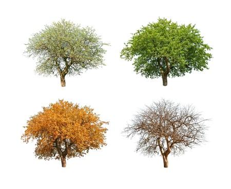 geïsoleerde boom in voor seizoen