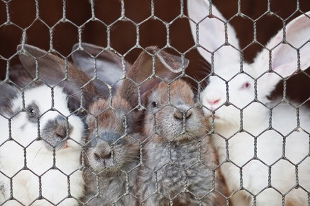 the hutch: small rabbits in cage closeup