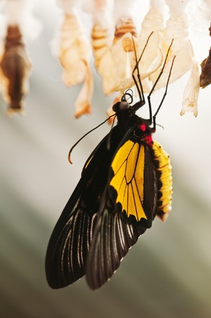 butterfly with cocoon close up photo