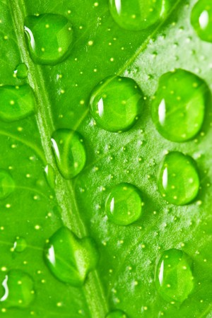 green leaf background with raindrops photo