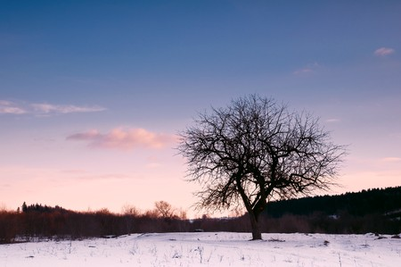 alone tree and in morning time Stock Photo - 8062846