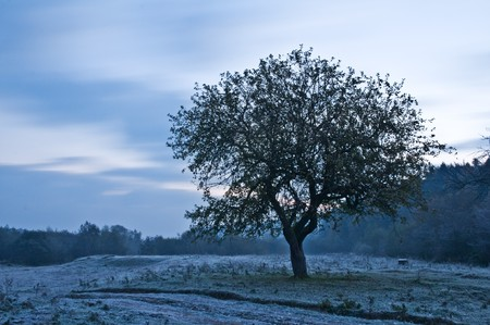 alone tree and in morning time photo
