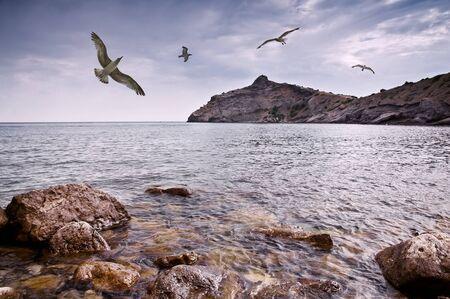 seagull flying on sea coast Stock Photo - 8451330