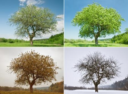 alone tree in for season photo