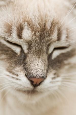 sad gray cat face close up Stock Photo - 9353435