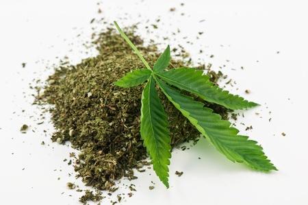 dry marijuana and green leaf photo