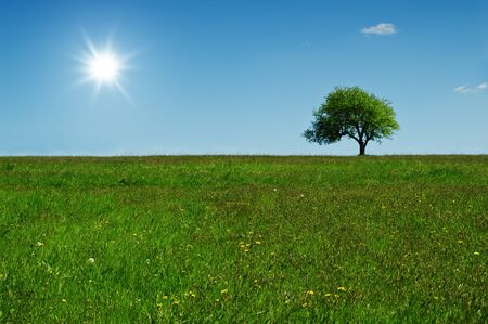green tree and sun in blue sky photo