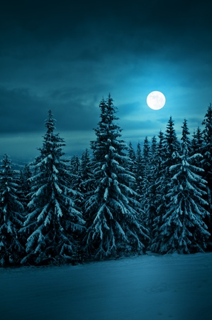 winter forest: tranquil blue night with moon