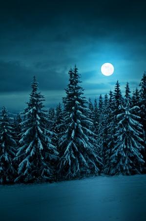 sapins: tranquille bleu nuit avec la lune Banque d'images