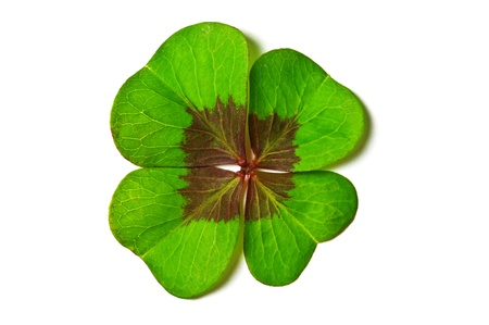 green clover isolated on white Stock Photo - 12471886
