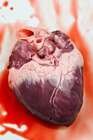 heart with blood close up Фото со стока
