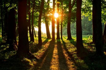 green forest on summer season