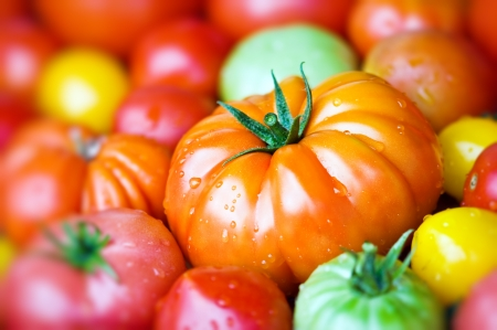 sorts: different sorts of tomato close up