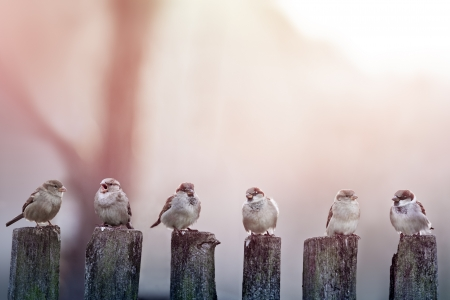 sparrows in a row on wooden fence Stock Photo