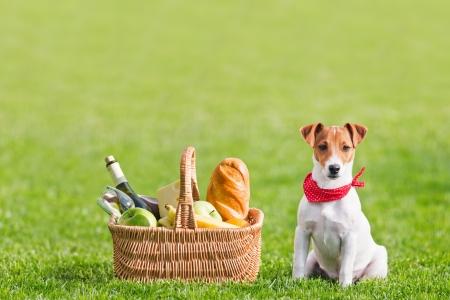 cesta de picnic en césped verde