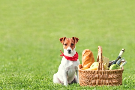 picnic basket on green lawn Stock Photo