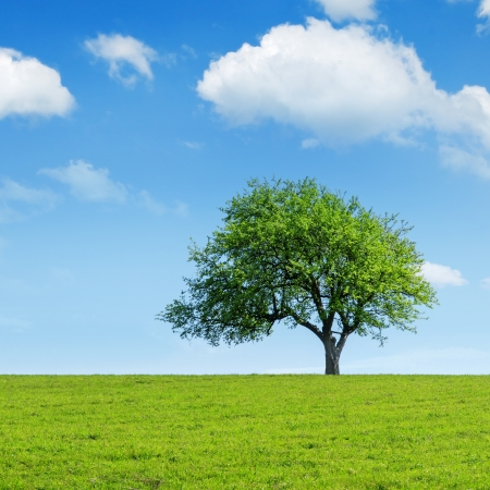 green tree and cloudy sky Foto de archivo