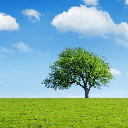 green tree and cloudy sky Archivio Fotografico