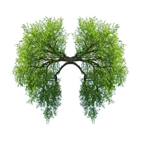 緑の木の肺を白で隔離されます。