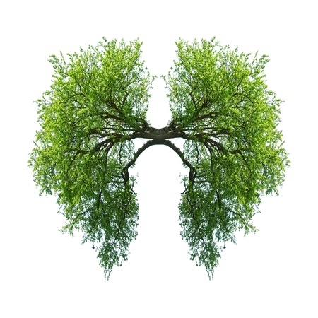 lung bronchus: green tree lungs isolated on white