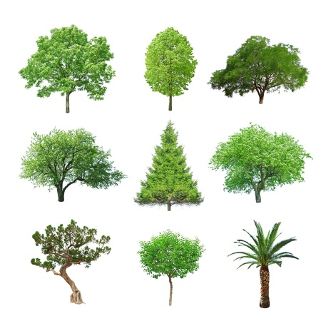 juniper tree: different tree set isolated on white Stock Photo