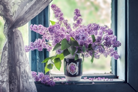 lilac flowers on old windows