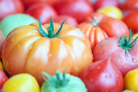 different sorts of tomato close up photo