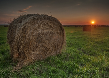 Dry hay bale on green meadow photo