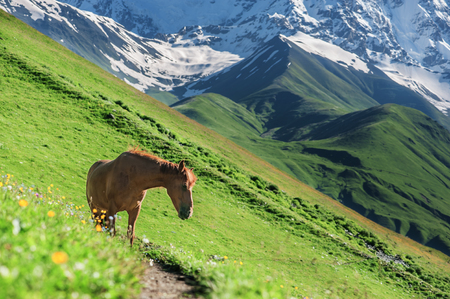 three horse in high mountains photo