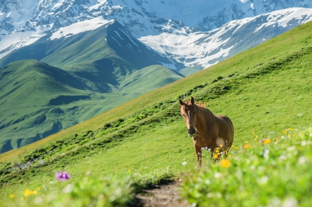 brown horse in high mountains photo