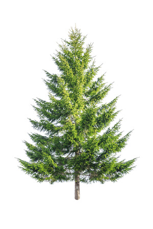 green fir isolated on white Banque d'images