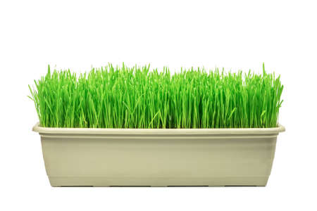 gro: green grass isolated on white background Stock Photo