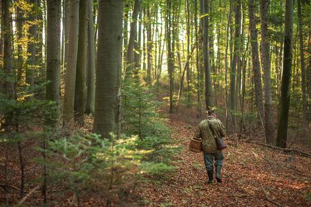 recoger: Mushroomer recoger setas en los bosques