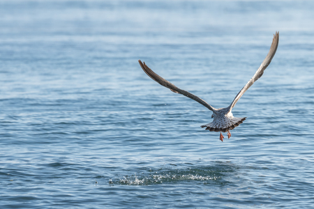 seagull flying above blue sea